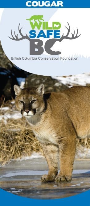 cougar 02 25 2016