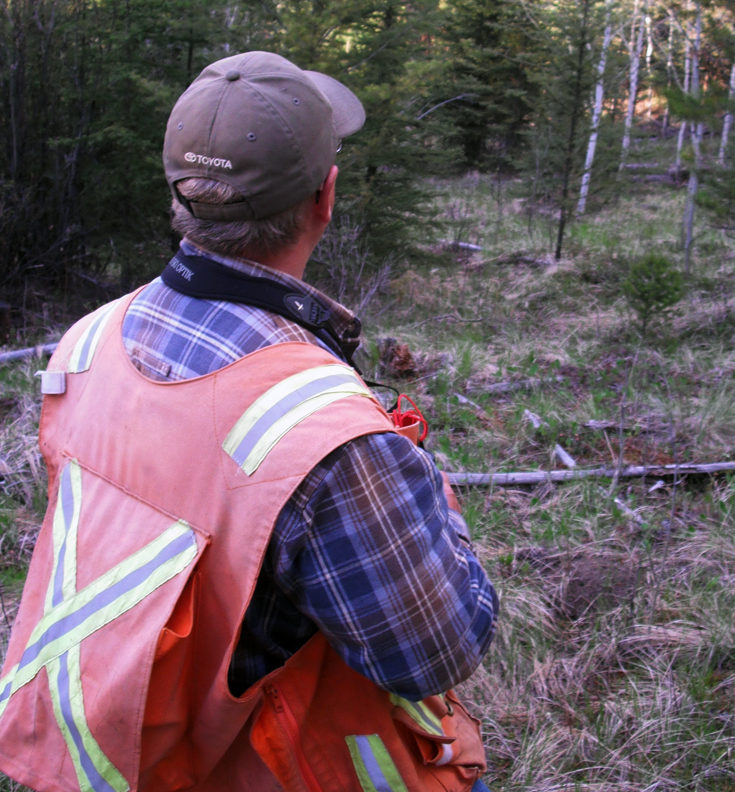 A forestry worker wearing a high visibility orange vest while out in the forest.