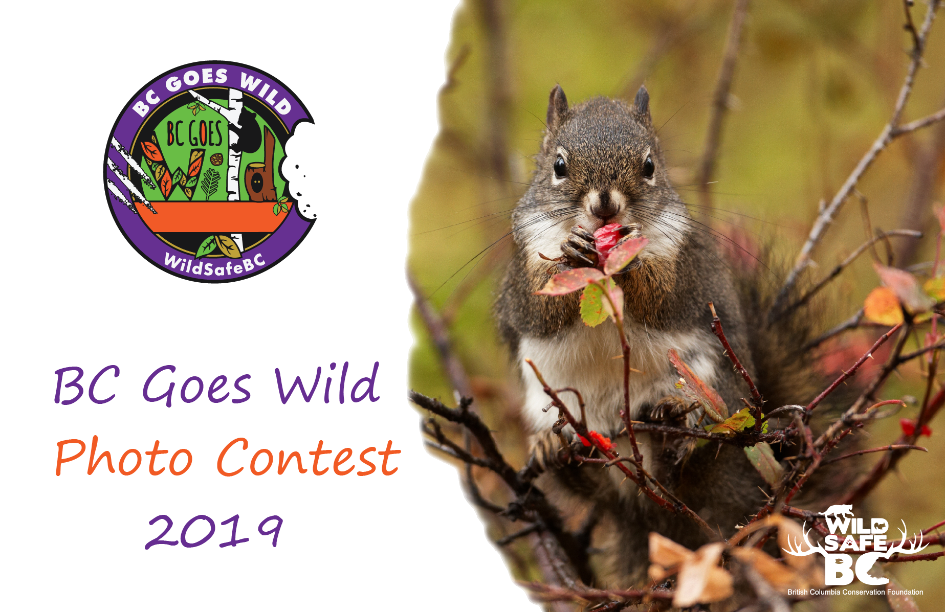 BCGW Photo Contest 2019 website banner