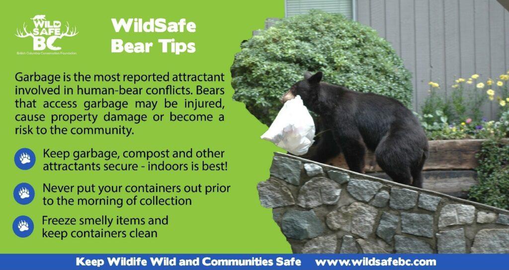 bin_tagging_wildsafe_bear_tips-min