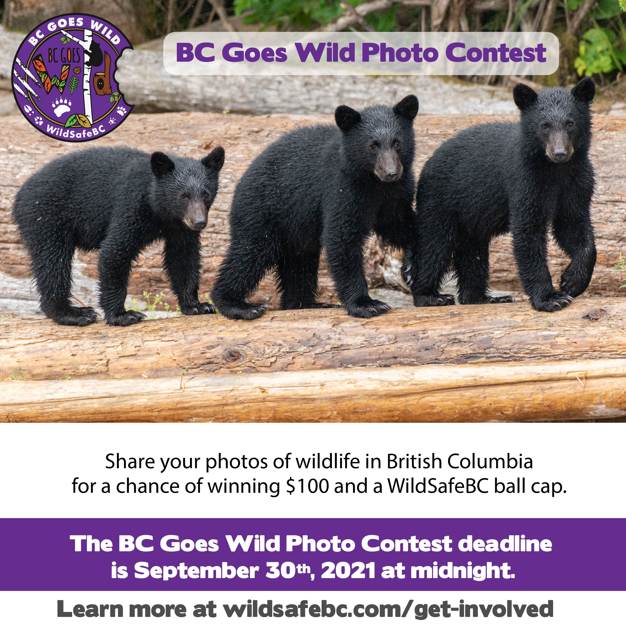 BCGW 2021 Photo Contest with 3 black bears-01